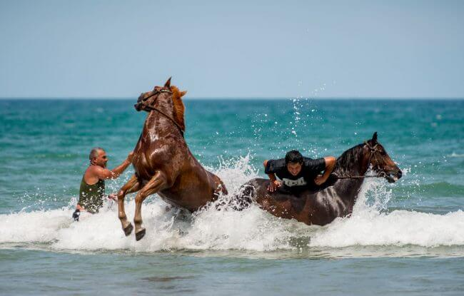 Cool Down | Tolaga Bay Beach Races. Horses cooling down after race. | Documentary IRIS Awards 2016 | Bronze